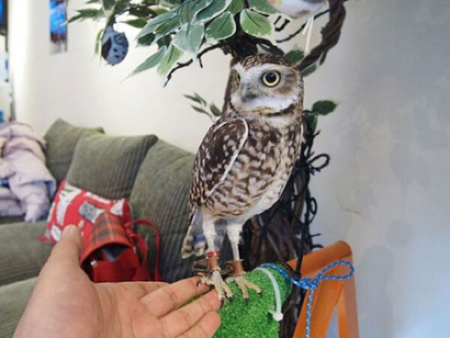 An Unusual Owl Bar Where You can Drink Coffee While Cuddling Owls-14