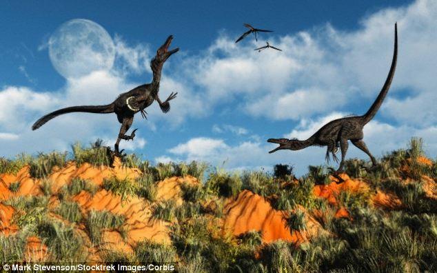 Velociraptor inspired robot