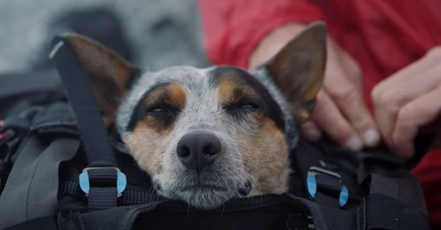 Whisper: World's First Dog To Enjoy BASE Jumping With His Master-