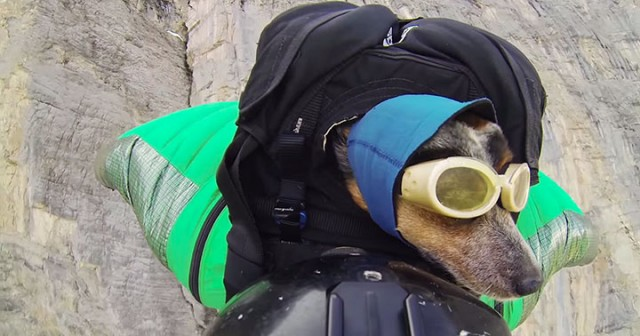 Whisper: World's First Dog To Enjoy BASE Jumping With His Master-1