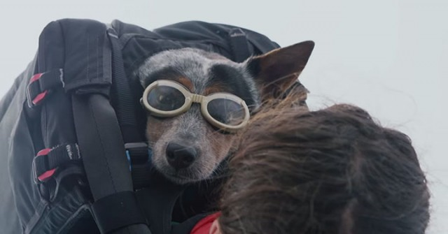 Whisper: World's First Dog To Enjoy BASE Jumping With His Master-2