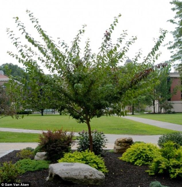 multi fruit tree