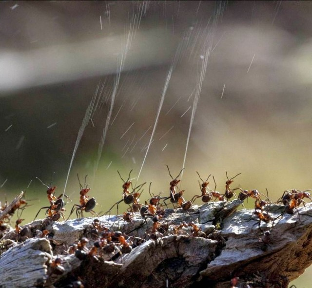 French Researchers Use Ant Secretions To Make Green Fuel-2