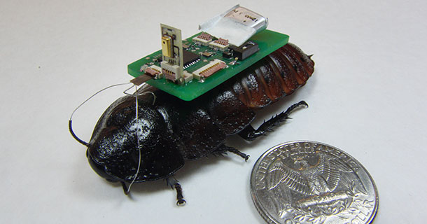 Cockroach Robot To Save Human Lives In Disasters-1