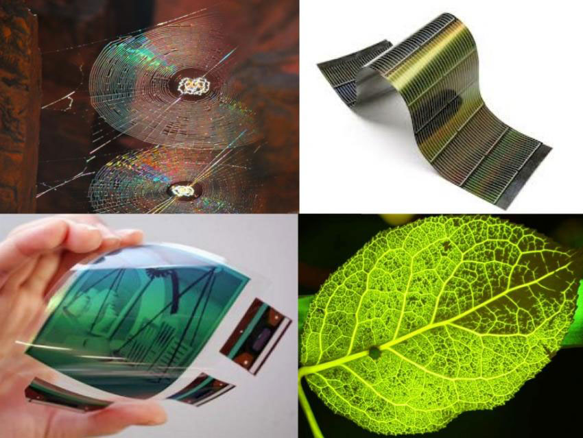 Future Smartphone Screens Will Be Inspired By Vegetable Leaves And Cobwebs-