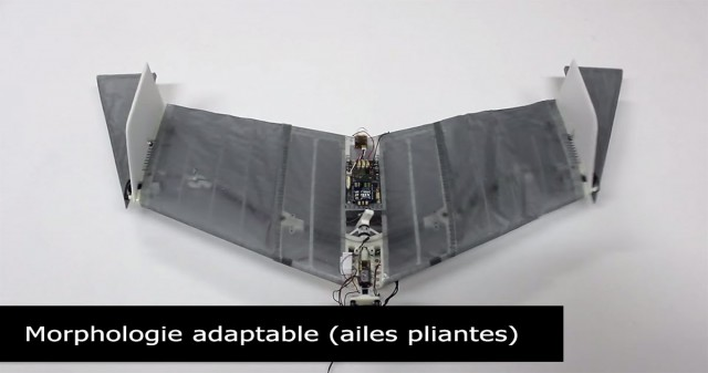 DALER-A bat inspired robot that can fly and move on the ground-