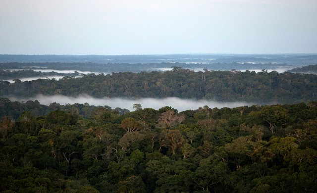 Discover This Gigantic Meteorological Tower Erected In Amazon Rainforest-5