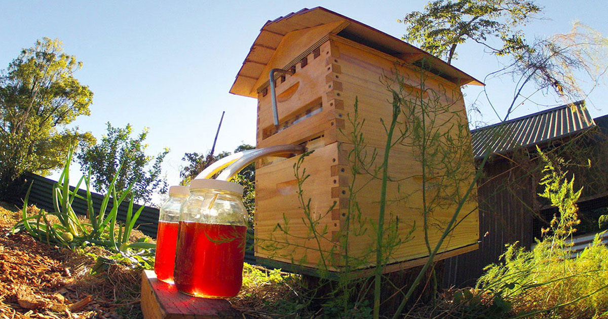 This Revolutionary Hive Enables Safe Honey Harvesting Without traumatizing Bees-5