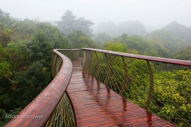 Boomslang: Take A Stroll Through This Breathtaking Walkway Above Trees-