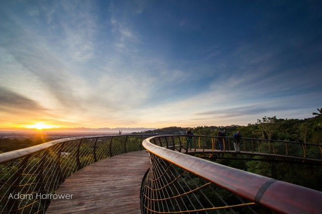 Boomslang: Take A Stroll Through This Breathtaking Walkway Above Trees-3