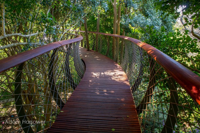 Boomslang: Take A Stroll Through This Breathtaking Walkway Above Trees-7