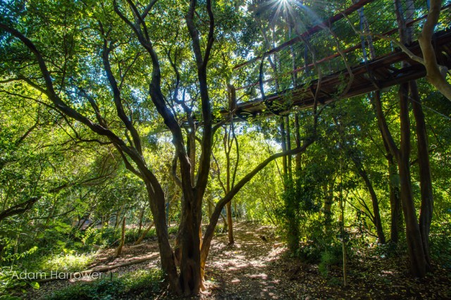 Boomslang: Take A Stroll Through This Breathtaking Walkway Above Trees-8