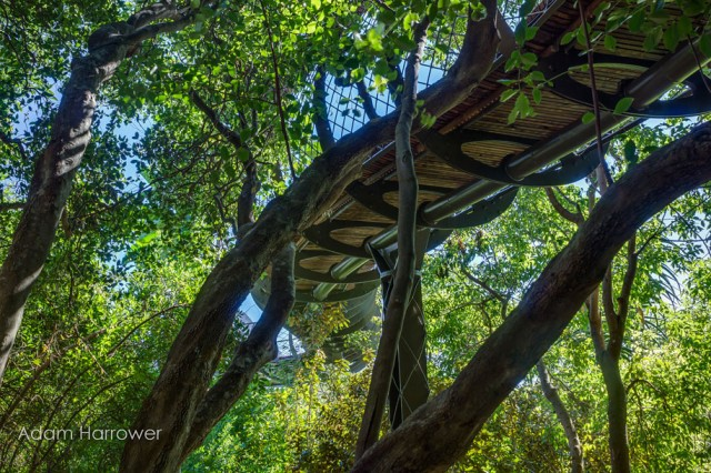 Boomslang: Take A Stroll Through This Breathtaking Walkway Above Trees-9
