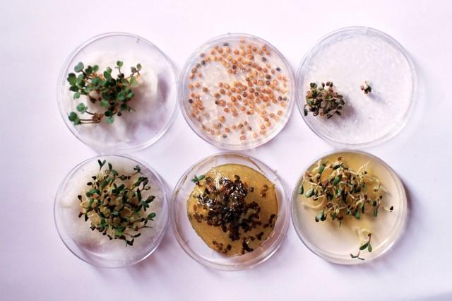 Enjoy Amazing 3D Printed Bio Food With Herbs And Mushrooms-3