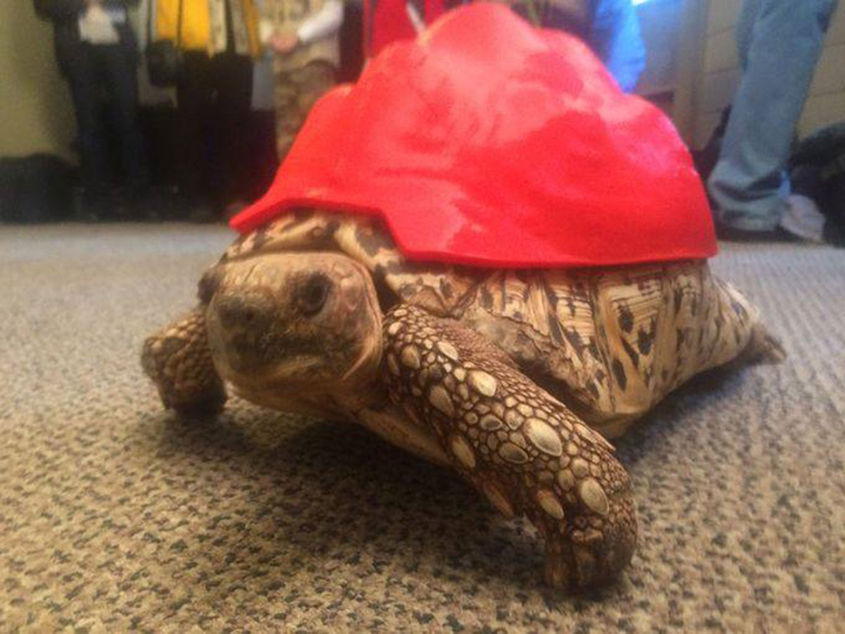 3D Printing Gives A New Life To Turtle Cleopatra