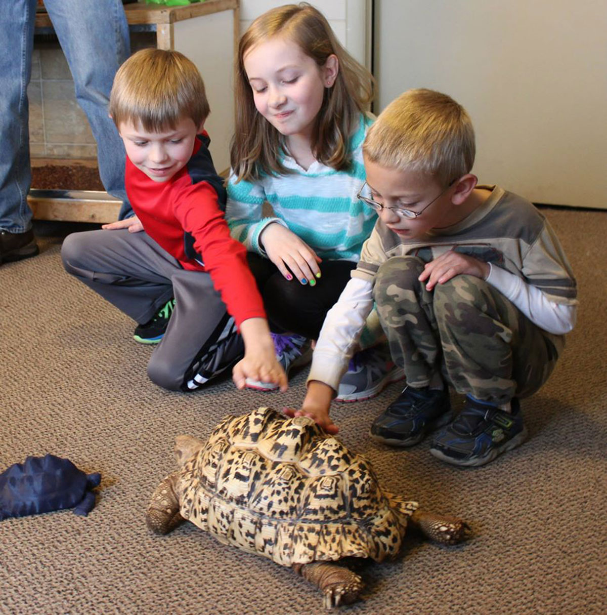 3D Printing Gives A New Life To Turtle Cleopatra-4