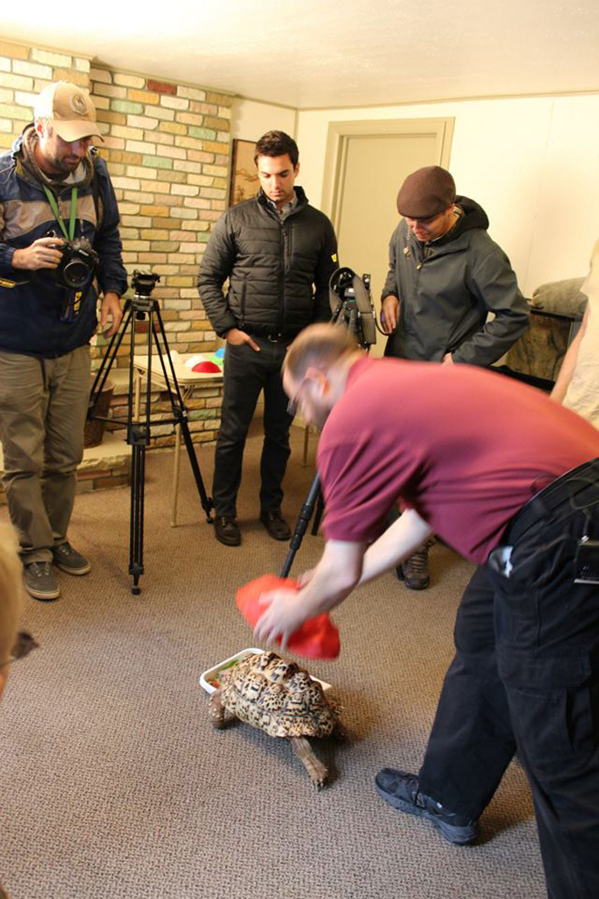 3D Printing Gives A New Life To Turtle Cleopatra-7