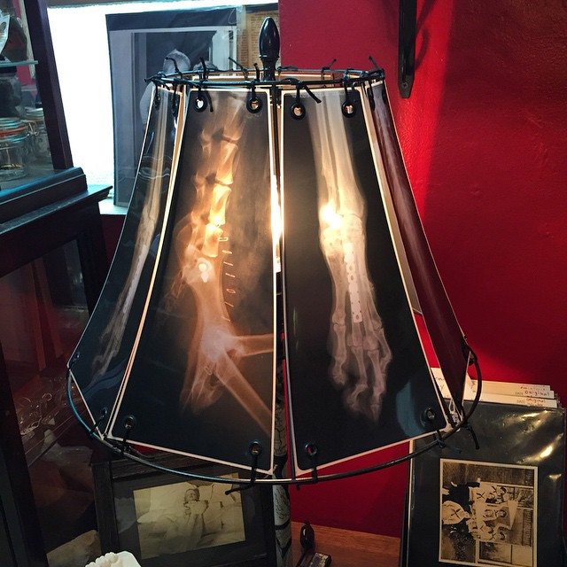 Make Awesome Lampshades From Animal X-Rays-
