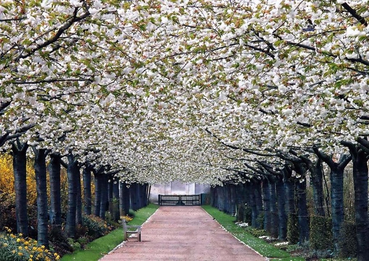 Top 50 most beautiful scenic places in france for Garden trees b q