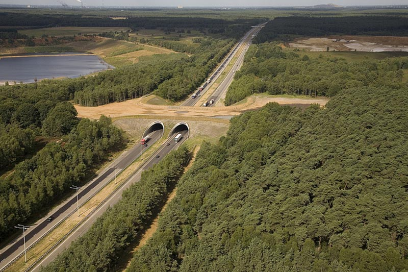 Eco-ducts: Ingenious Bridges To Save Thousands Of Animals-