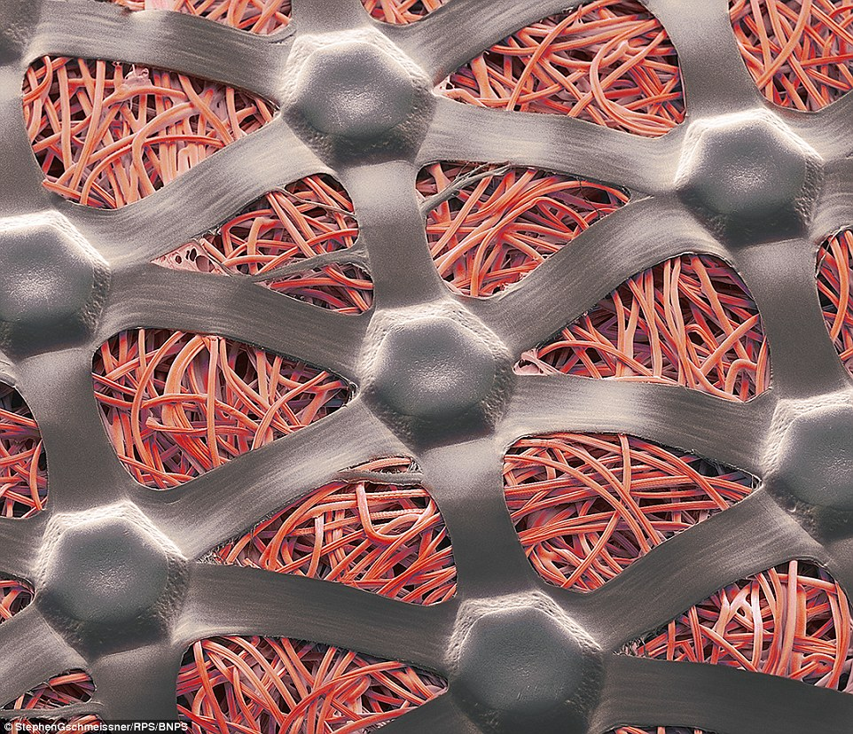 Image captured using electron microscope reveals the structure of spaghetti