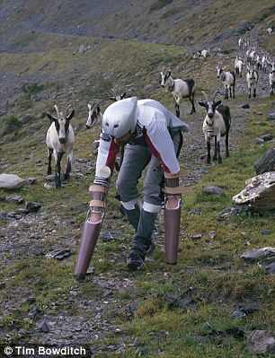A Researcher Spends Time As A Goat In A Herd And The Reason Would Certainly Disturb You-2