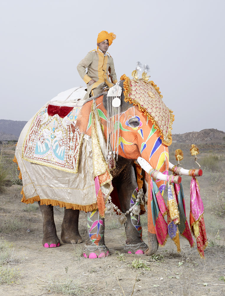 20 Elephants Decorated In Thousand Colors For The Jaipur Elephant Festival-1