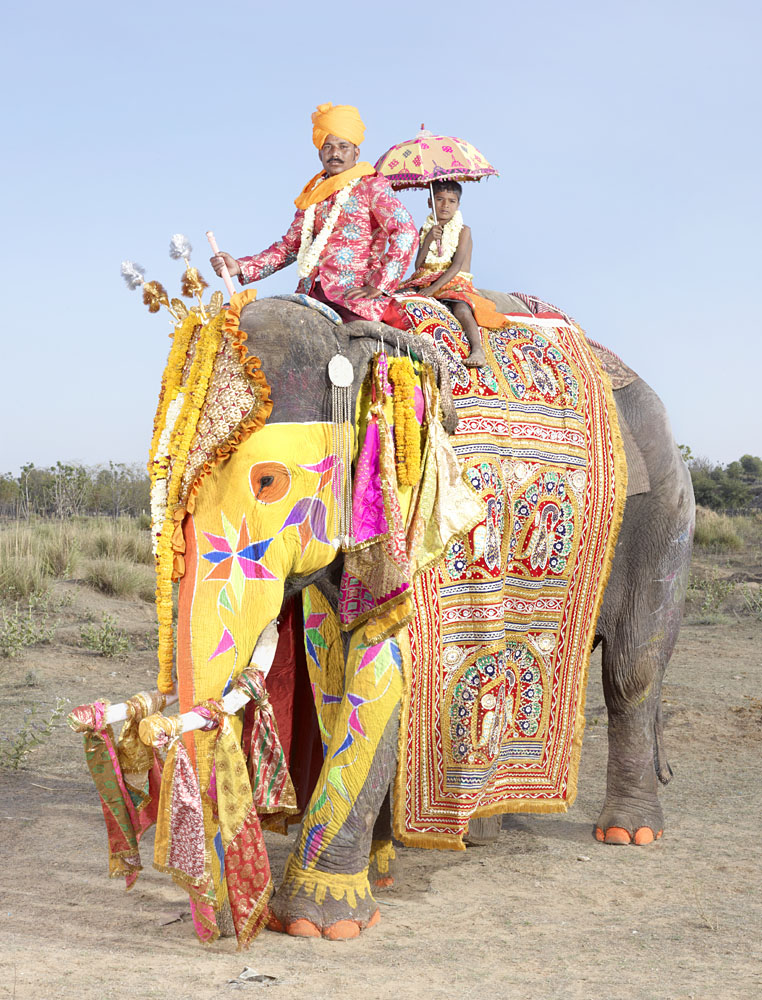 20 Elephants Decorated In Thousand Colors For The Jaipur Elephant Festival-13