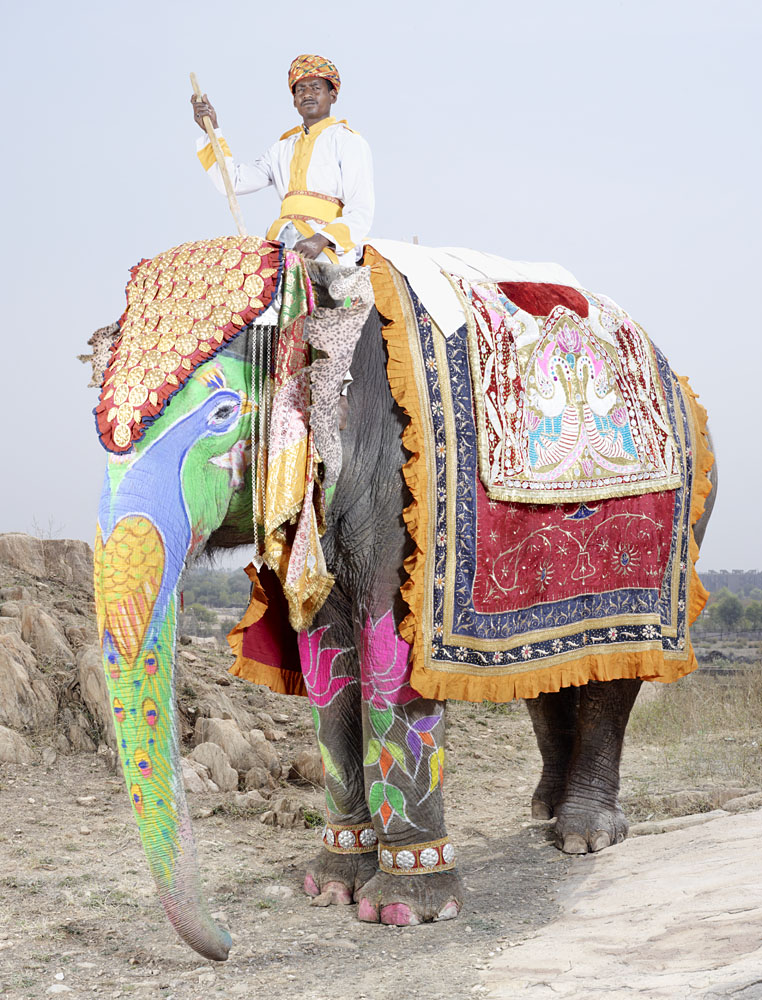 20 Elephants Decorated In Thousand Colors For The Jaipur Elephant Festival-19
