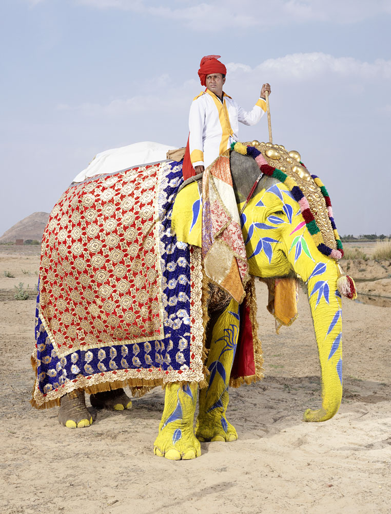 20 Elephants Decorated In Thousand Colors For The Jaipur Elephant Festival-4