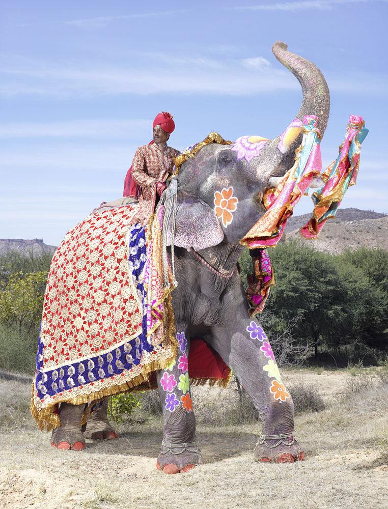 20 Elephants Decorated In Thousand Colors For The Jaipur Elephant Festival-8
