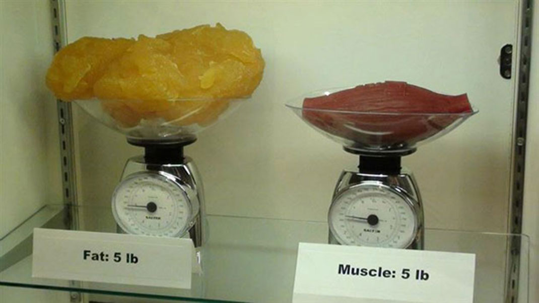 2 kilos of fat against 2 kilos of muscle