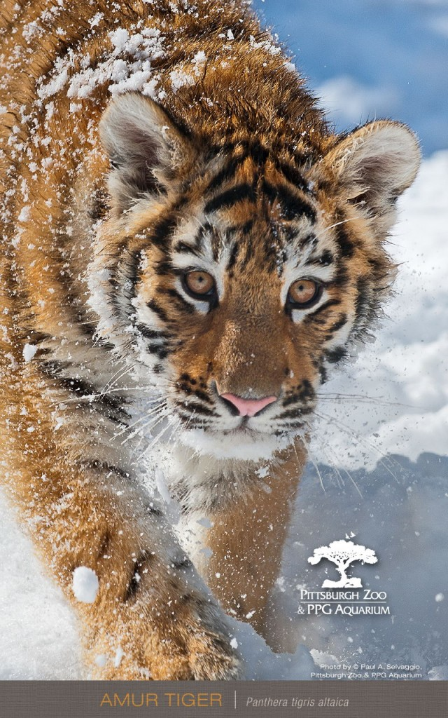 HD animals mobile phone wallpapers 800x1280 (05)