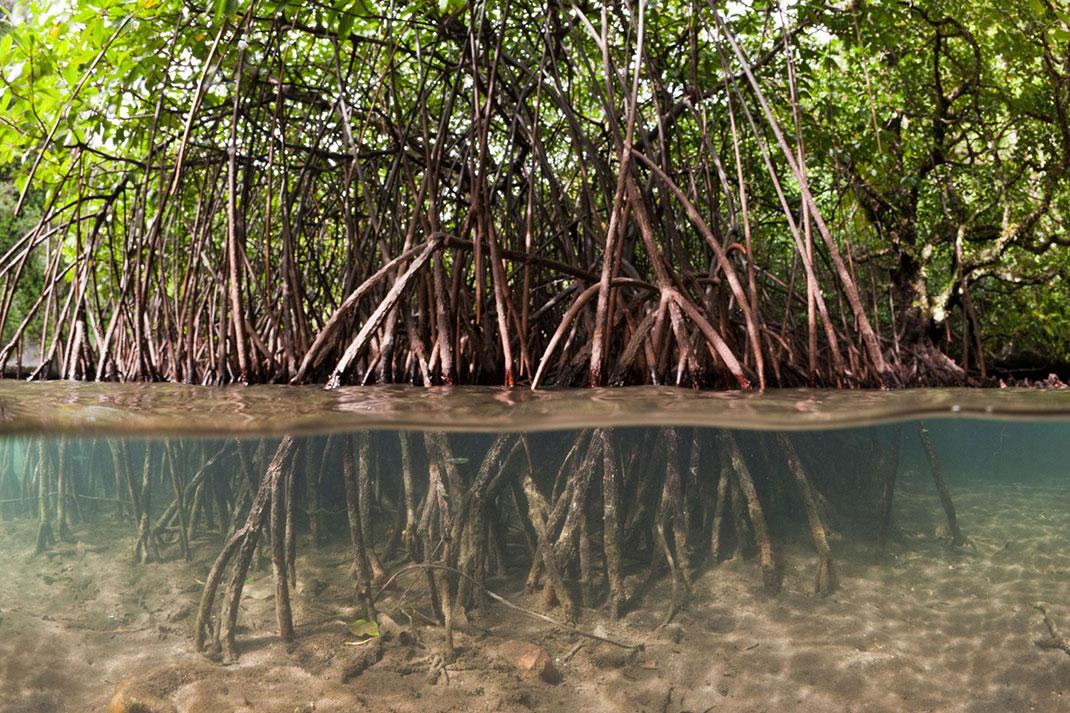 Palau islands-Discover This Gigantic Marine Sanctuary Where Wildlife Is Flourishing Away From Human Activity-10