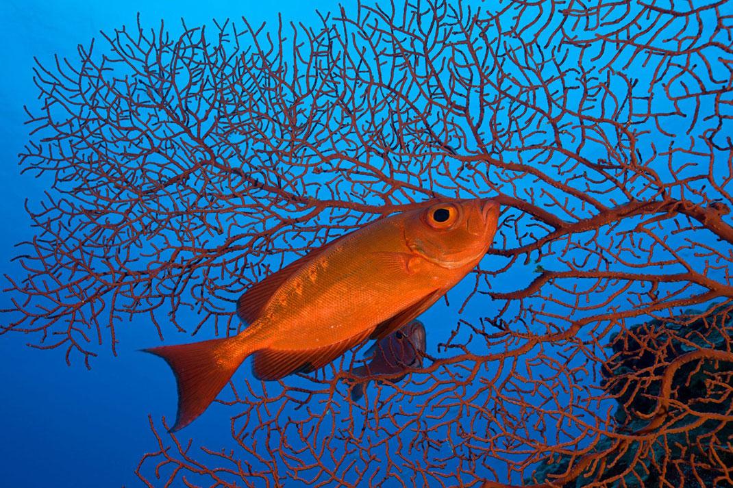 Palau islands-Discover This Gigantic Marine Sanctuary Where Wildlife Is Flourishing Away From Human Activity-11