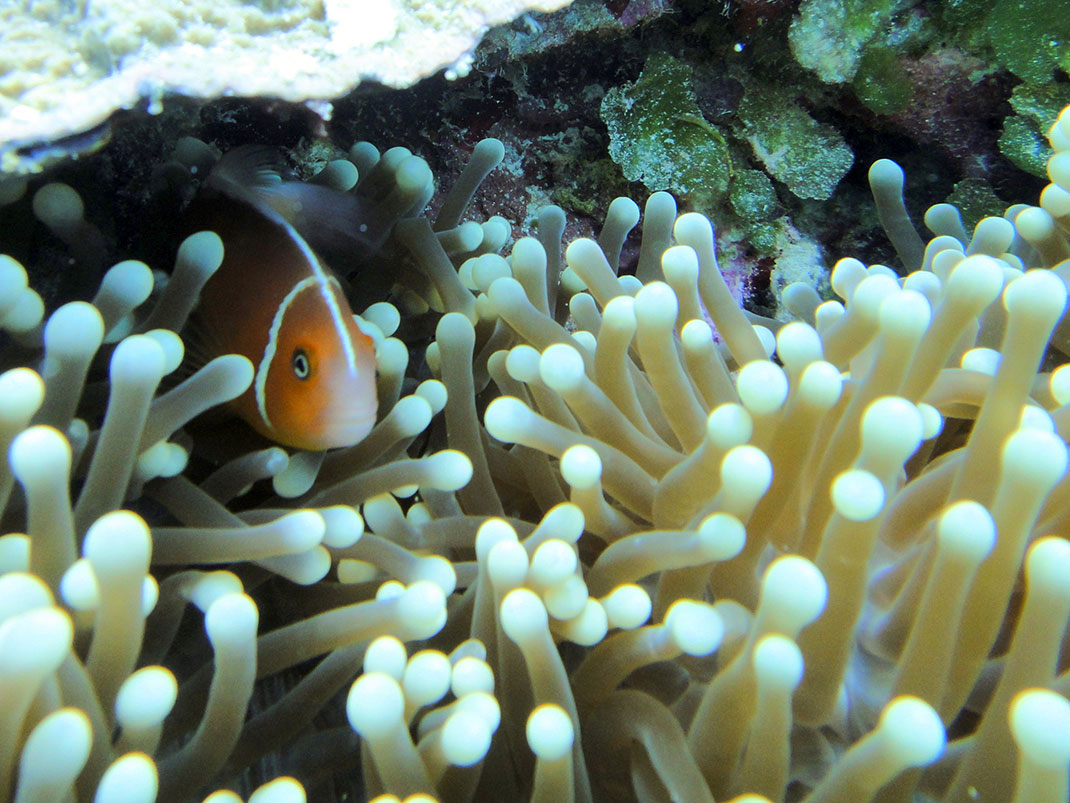 Palau islands-Discover This Gigantic Marine Sanctuary Where Wildlife Is Flourishing Away From Human Activity-15