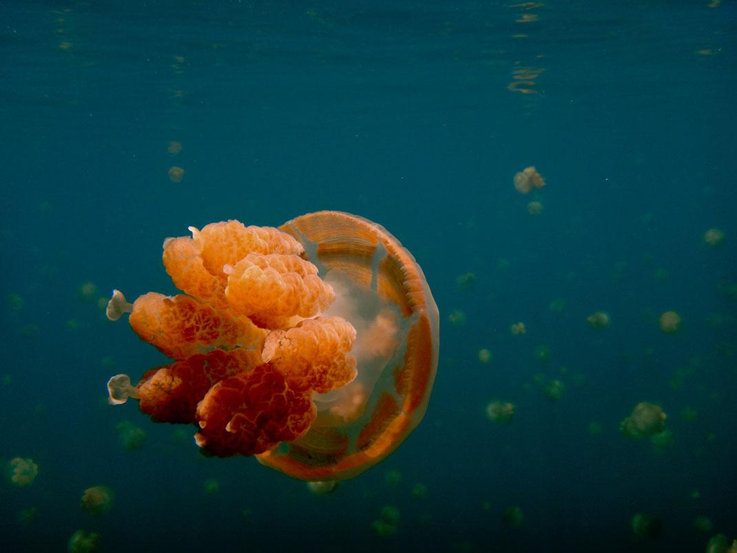 Palau islands-Discover This Gigantic Marine Sanctuary Where Wildlife Is Flourishing Away From Human Activity-16
