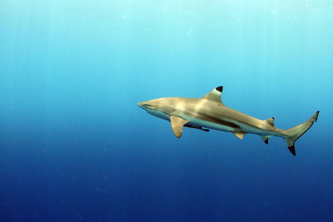 Palau islands-Discover This Gigantic Marine Sanctuary Where Wildlife Is Flourishing Away From Human Activity-19
