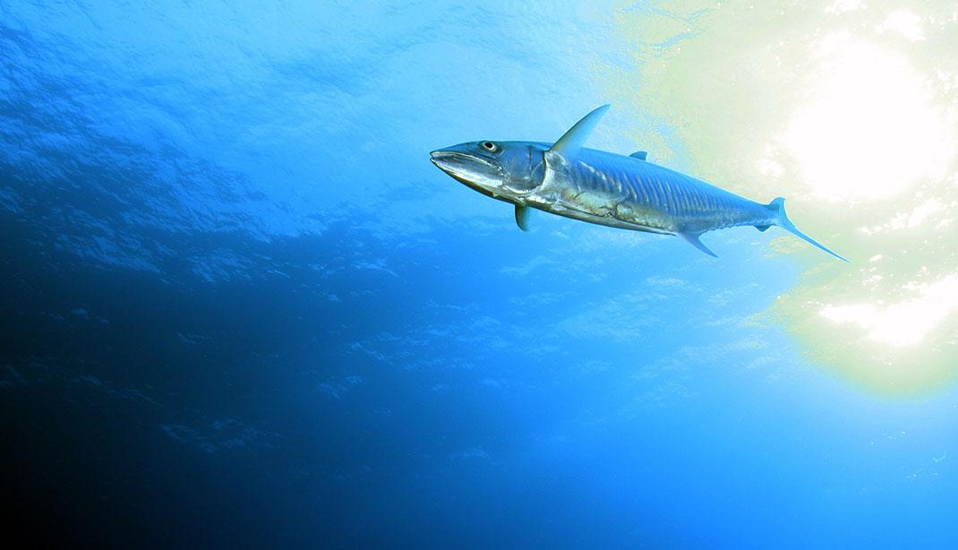 Palau islands-Discover This Gigantic Marine Sanctuary Where Wildlife Is Flourishing Away From Human Activity-22