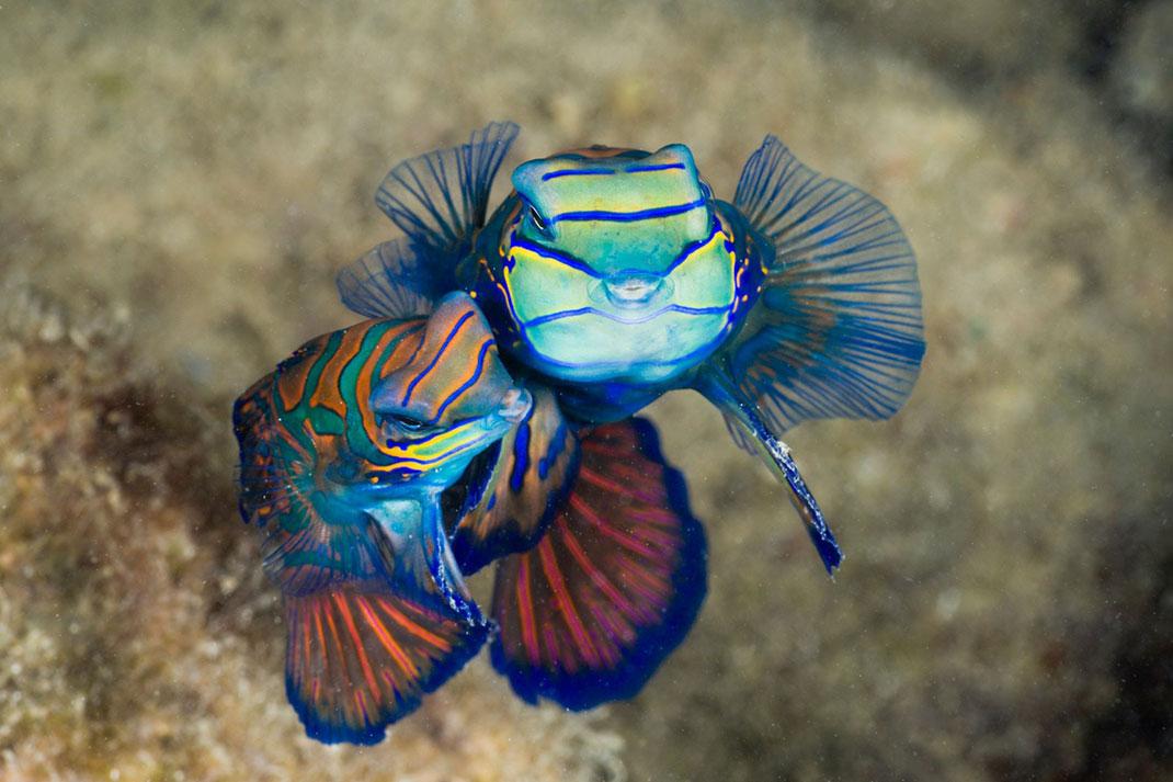 Palau islands-Discover This Gigantic Marine Sanctuary Where Wildlife Is Flourishing Away From Human Activity-3
