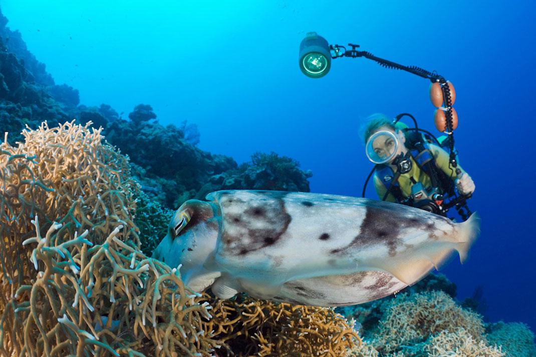 Palau islands-Discover This Gigantic Marine Sanctuary Where Wildlife Is Flourishing Away From Human Activity-5