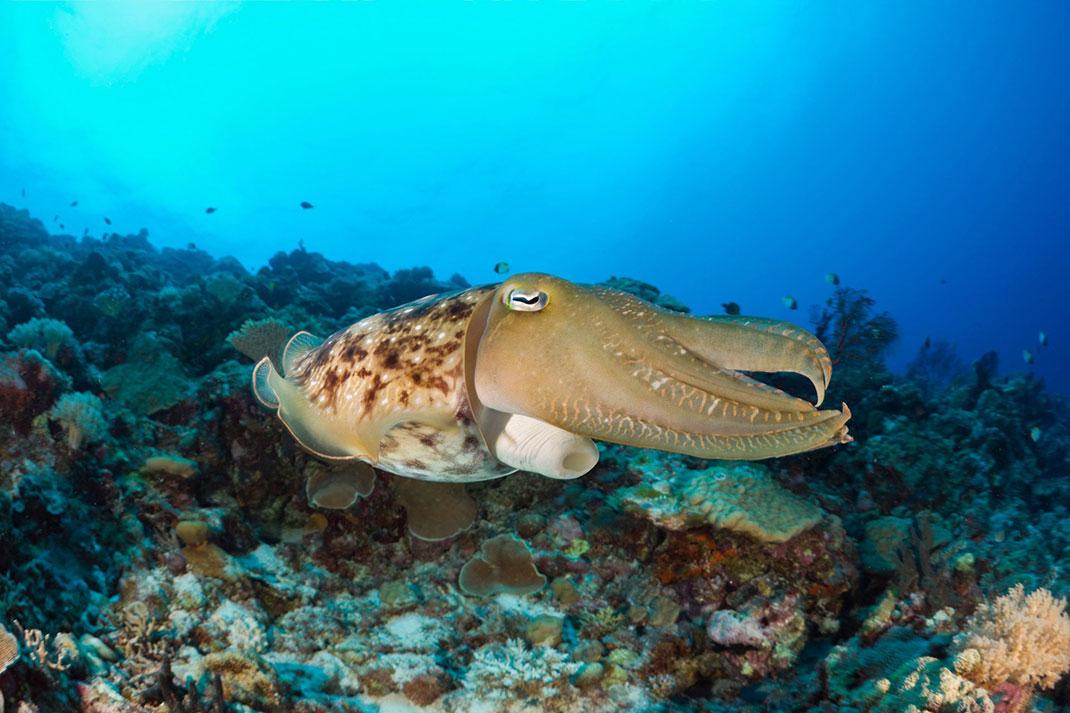 Palau islands-Discover This Gigantic Marine Sanctuary Where Wildlife Is Flourishing Away From Human Activity-9