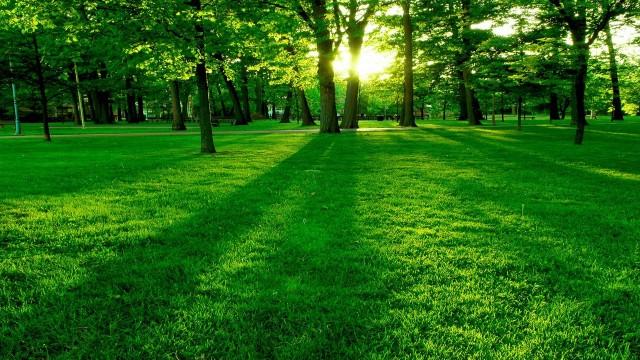 خلفية خضراء عالية الوضوح 34255