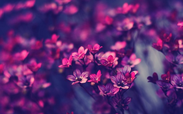 HD purple wallpaper image to use as background-35
