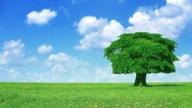 Tree wallpaper to use as background-24