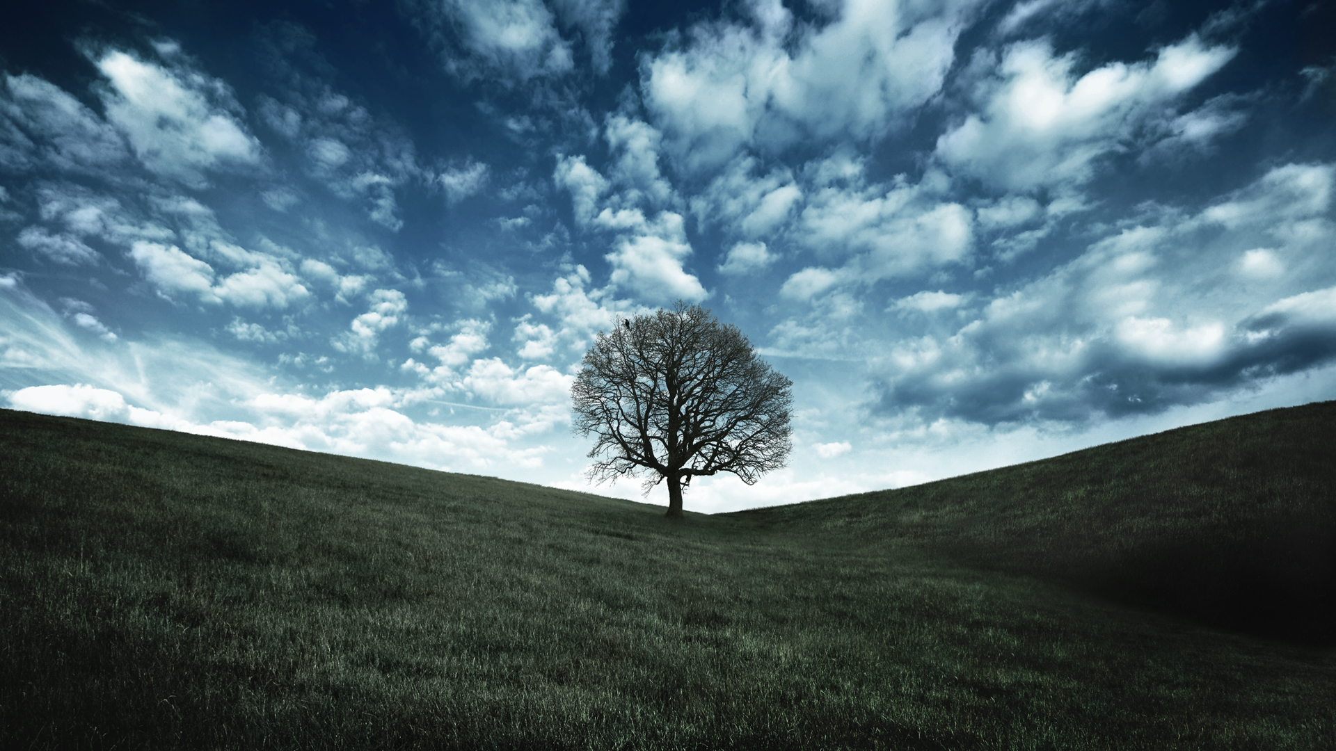 40 hd tree wallpapers backgrounds for free download - Mainframe wallpaper ...