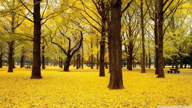 خلفية صفراء في عالية الوضوح 34218