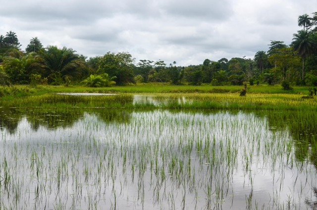 Contemplate The Rich Landscape Of Sierra Leone, This Beautiful Territory Of West Africa--17