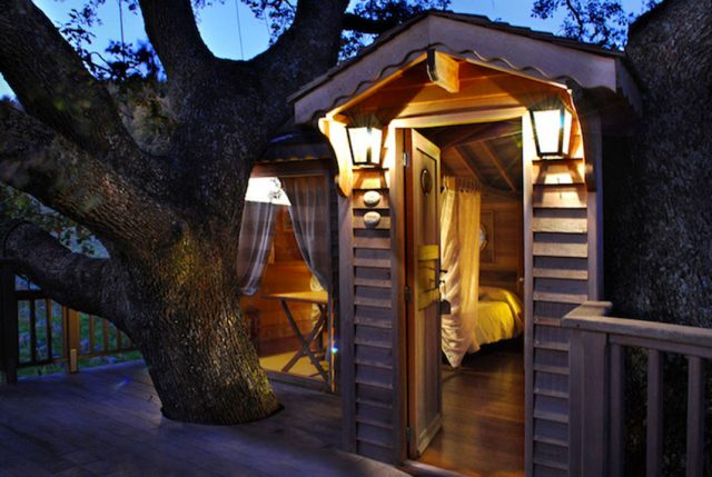 Blue Suit: A Beautiful Cabin Nestled In Trees In The Heart Of A Lavender Field--1