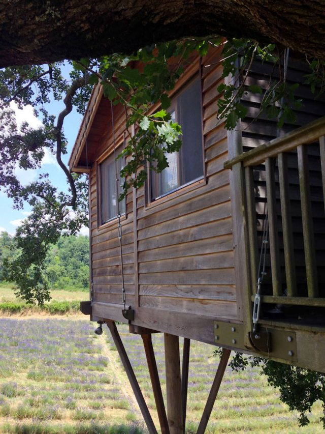 Blue Suit: A Beautiful Cabin Nestled In Trees In The Heart Of A Lavender Field--8